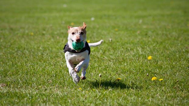 Visit an Off-leash Dog Park