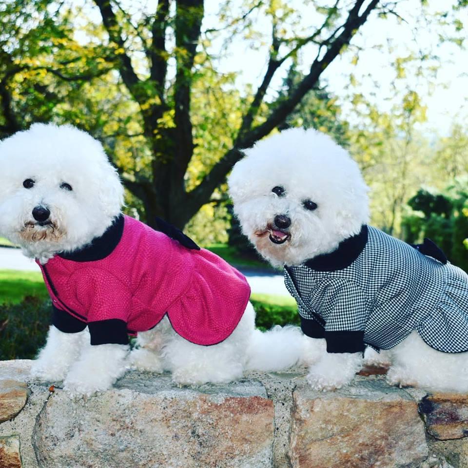 dog fleeces coats and jackets