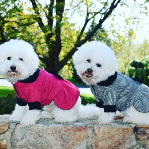 Pet Coats, Fleeces, and Jackets