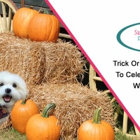Trick or Treat Fun Ways to Celebrate Halloween with Your Pet