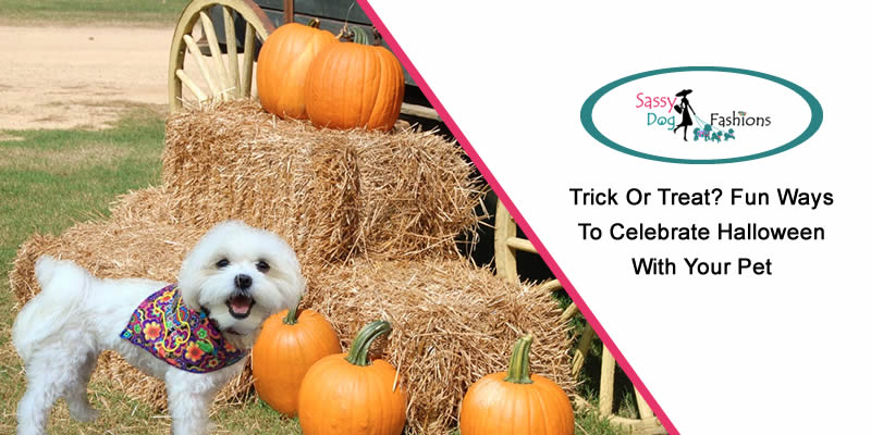 Trick or Treat? Fun Ways to Celebrate Halloween with Your Pet