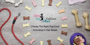 Choose The Right Dog Food According to their Breed
