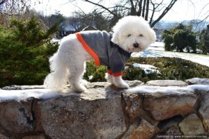 Long Sleeve Fleece Dog Pullover