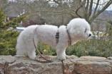 Furberry Adjustable DOG HARNESS & LEASH SET in Fashion Nova Checks in Small Medium Large