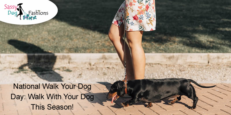 National Walk Your Dog Day: Walk With Your Dog This Season!