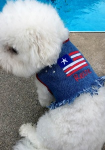Blue DENIM Dog VEST Jacket Patriotic Stars 'n Stripes
