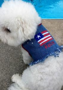 Blue DENIM Dog VEST Jacket Patriotic Stars 'n Stripes