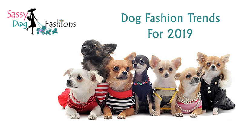 Dog Fashion Trends For 2019