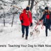 Dog Leash Manners Teaching Your Dog to Walk Nicely on the Leash
