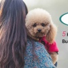 5 Hacks for A Busy Pet Parent