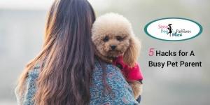 5 Hacks for A Busy Pet Parent