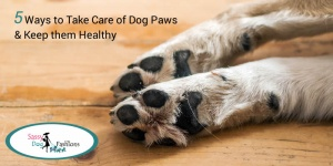 5 Ways to Take Care of Dog Paws & Keep them Healthy