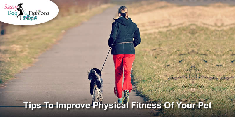 Tips To Improve Physical Fitness of Your Pet