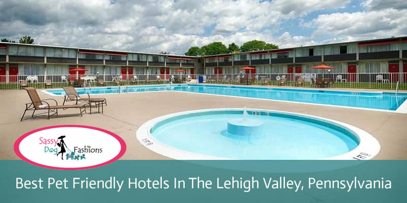 Best Pet Friendly Hotels in the Lehigh Valley, Pennsylvania