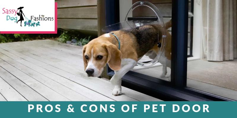 Pros & Cons Of Pet Door
