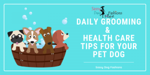Daily Grooming & Health Care Tips For Your Pet Dog