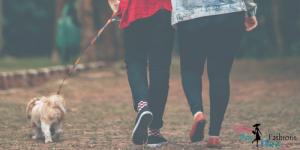 7 Dog Walking Tips Every Dog Parent Should Know- SassyDogFashions