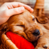 5 Tips to Help Your Dog Sleep Through the Night-Sassy Dog Fashions