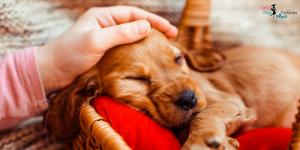 5 Tips to Help Your Dog Sleep Through the Night-Sassy Dog Fashions