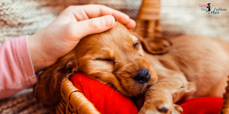 5 Tips to Help Your Dog Sleep Through the Night