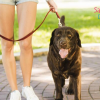 6 Common Dog Walking Mistakes You're Making