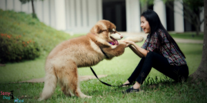 Fun Ideas To Do with Your Dog This National Dog Week