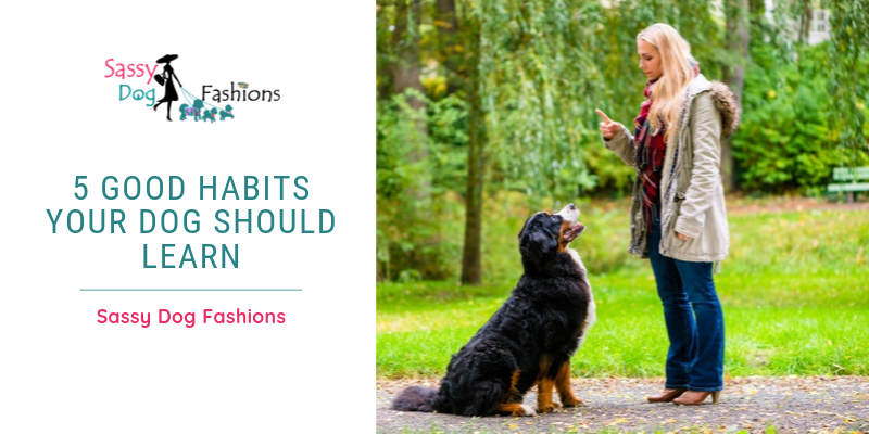 5 Good Habits Your Dog should Learn