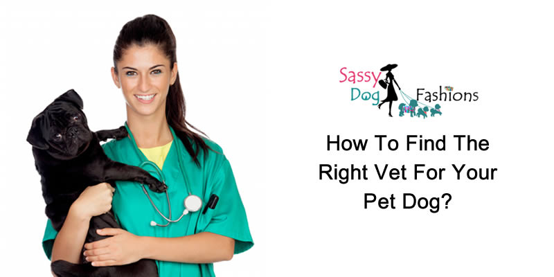 How to find the right Vet for your Pet Dog?