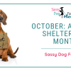 October: Adopt-A-Shelter Dog Month