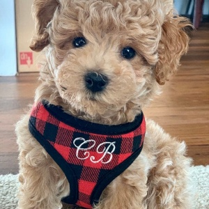 Mini Red and Black Buffalo Plaid Soft Dog Pet Harness