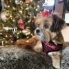 Custom Designer Red Houndstooth Plaid Soft Mesh Dog Harness