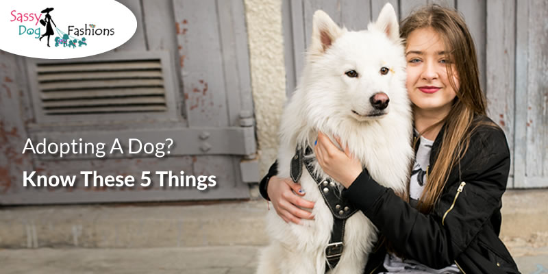 Adopting A Dog? Know These 5 Things