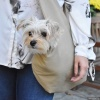 Classical Tan Khaki Pet Sling Dog Carrier for New Puppy and Small Dogs to 9 Pounds
