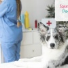 Spread the Word Pet Cancer Awareness Month