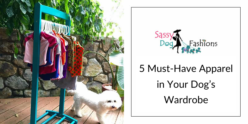 5 Must Have Apparel in Your Dog's Wardrobe