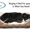 Buying A Bed For your Dog Here is What You Need to Know