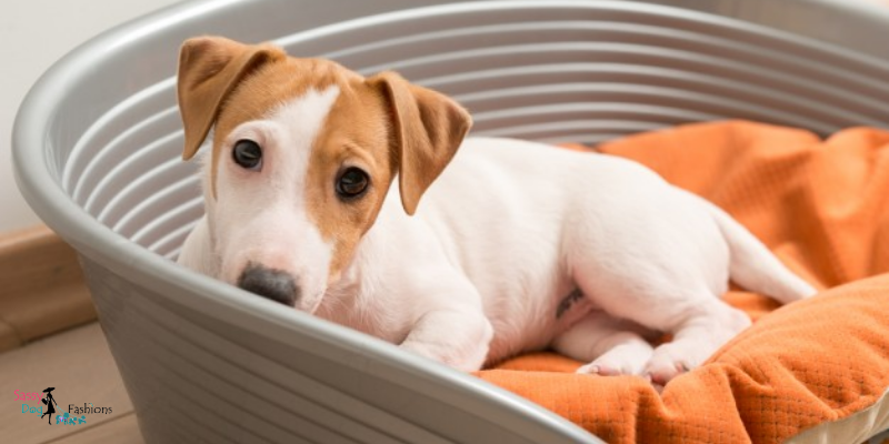 Buying A Bed for Your Dog?  Here Is What You Need to Know