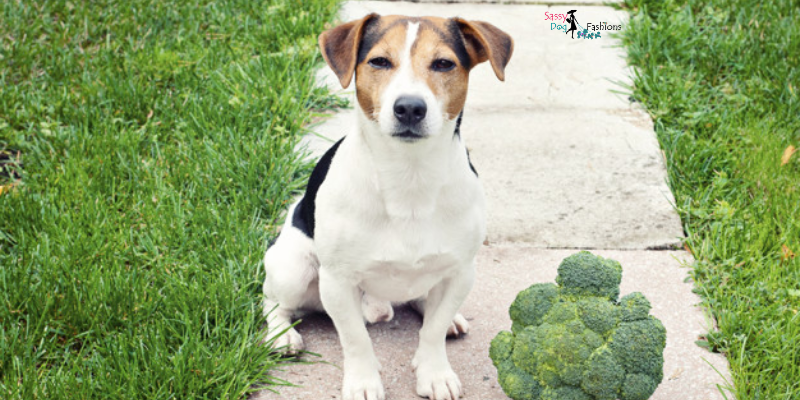 Five Dog-Friendly Veggies