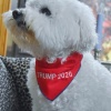 Trump 2020 Reversible Pet Dog Bandana for Cats and Puppies too