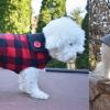 LATEST WINTER FASHION TRENDS FOR YOUR PET