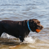 Water Safety Guide For Dog Parents