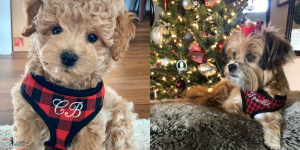 Custom Embroidered RED Soft Dog Harnesses Make The Perfect Valentine's Day Gift
