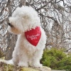 Red DEPLORABLE DOG Reversible Pet Dog Bandana in All Sizes for Puppies too