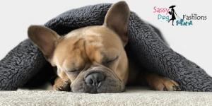 More Sleep = Happy Dog