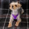purple harness 2