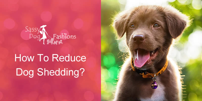 How To Reduce Dog Shedding?