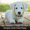 New Puppy Checklist 5 Things You Need Before Bringing Home A New Puppy