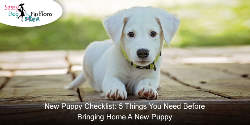 New Puppy Checklist: 5 Things You Need Before Bringing Home A New Puppy