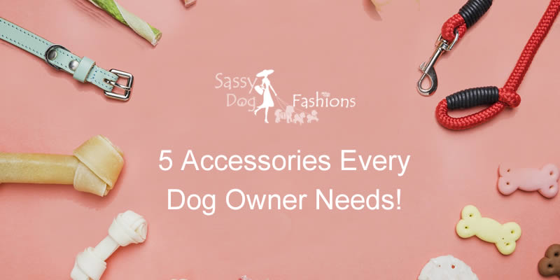 5 Accessories Every Dog Owner Needs!