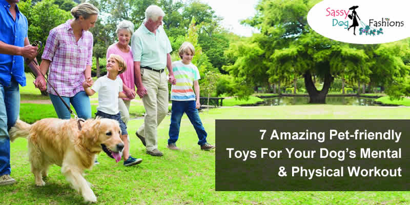 7 Amazing Pet-friendly Toys For Your Dog's Mental & Physical Workout